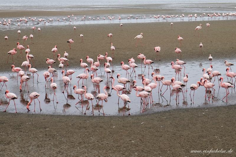 11Namibia-Flamingos