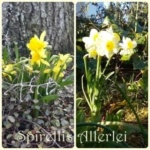 {Leben} Frühjahr, Frühjahr wunderbar…