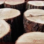 {Leben} Holz, Holz, Holz      ODER       Bodyshaping 2.0