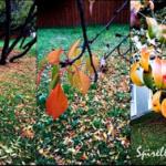 {DIY} Herbstdeko im Rahmen…