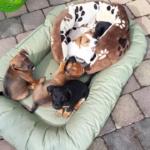 {Leben} Und dann heißt es Abschied nehmen – aber bitte richtig! – Unsere Babyhunde ziehen mit Tasso e.V. aus