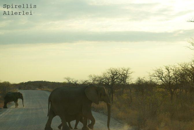 spirellis-allerlei-namibia-etosha-elefanten-mit-baby