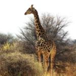 {Reisen} Fernweh ankurbeln – ein paar Impressionen aus Namibia und warum ich dieses Land so liebe
