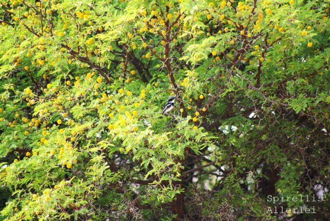 spirellis-allerlei-namibia-vogel