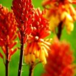 {DIY} Urlaubsvertretung für eure Pflanzen – 5 Tipps, dass der Nachbar nicht gießen muss