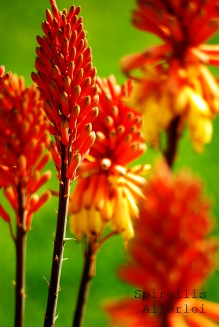 spirellisallerlei-pflanzen-giessen-urlaub