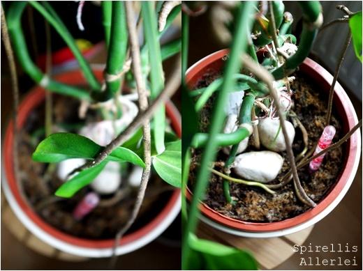 spirellisallerlei-pflanzen-im-urlaub