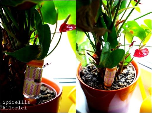 spirellisallerlei-urlaub-und-pflanzen-giessen