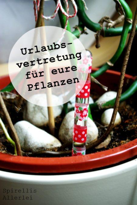 spriellisallerlei-urlaub-blumen-zimmerpflanzen