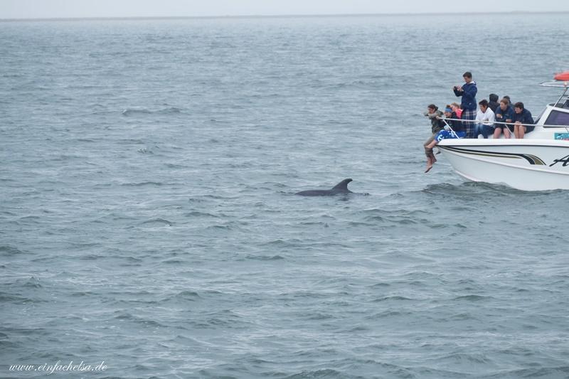 5Namibia-delfin-im-Ozean
