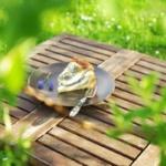 {Kuchen&Torten} Mini Quarkkuchen mit Mohn